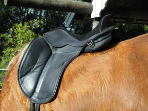 Baloun F1 dressursadel fra Flexisadler. Sadlen er semi bomløs og giver en tæt kontakt til hesten. Foto. hestezonen.dk