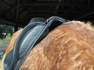 Baloun F1 med afhøvlede puder ved skuldrene - perfekt til at give bedre skulderfrihed. Desuden er Knæstøtten justerbar/aftagelig, hvis man ønsker det. Foto. hestezonen.dk