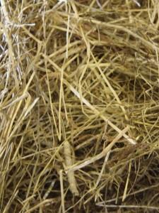 Godt grovfoder dufter dejligt og støver ikke. Foto. hestezonen.dk