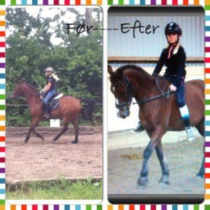 hestezonen, pony Tabasco, før og efter behandling