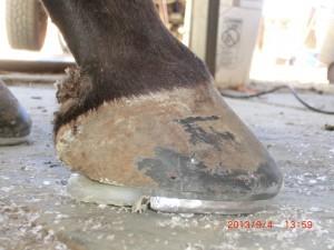 Hovens kvalitet og form er afgørende for hestens holdbarhed. Foto. hestezonen.dk