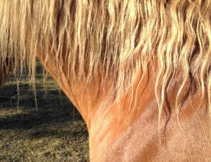 tilskudsprodukter til heste