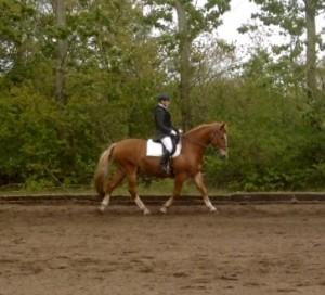 Til dressurstævne på min hest Valdemar.