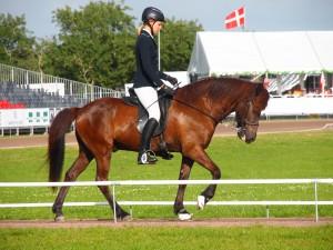 VM for Islandske heste i Herning 2015. Foto. hestezonen.dk