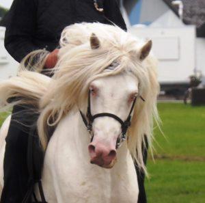 Charme, selvtillid og lækkert hår! Foto. hestezonen.dk