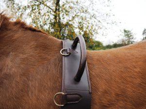 Longegjorden kan trykke på hestens torntappe. Foto. hestezonen.dk