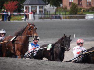 leverproblemer nedsætter hestes præstationsevne