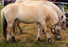 heste der spiser halm
