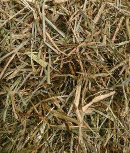 Fibre - Dengie meadow grass - Herning Horse Show - Hest og Rytter
