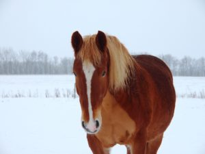 hest der fryser