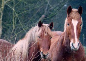 sommereksem hest